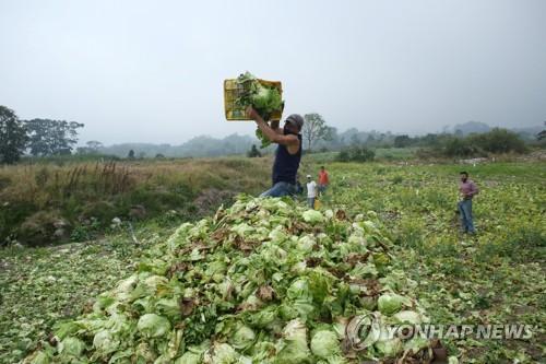 굶주림에 지친 주민들·썩어가는 농작물…베네수엘라의 비극