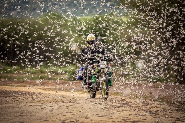 케냐에 메뚜기떼가 공습한 모습 [사진=AP 연합뉴스]