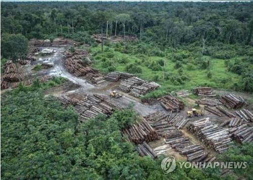 """""""아마존 열대우림 무단벌채 처벌 제대로 안돼 숲 파괴 늘어"""""""