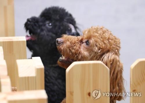 춘천시 반려동물 산업 육성…플랫폼센터·인프라 추진