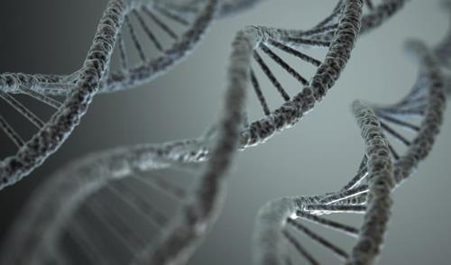"""""""마이크로 RNA가 항암 단백질 조절하는 기제 첫 발견"""""""