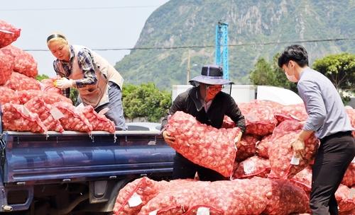 정부, '과잉 생산' 햇마늘 조기 수매…마늘 농가 지원