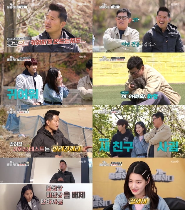 지난 11일 방송된 '개는 훌륭하다' /사진=KBS2 제공