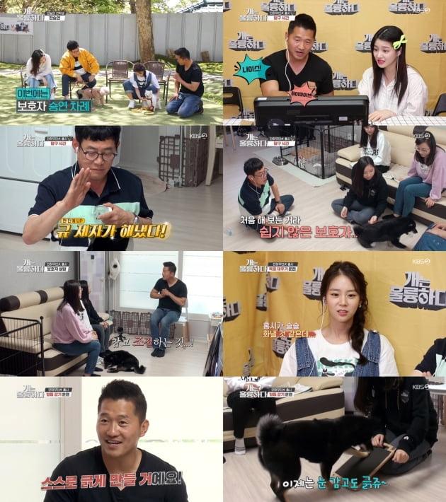 지난 25일 방송된 '개훌륭'/ 사진=KBS2 제공