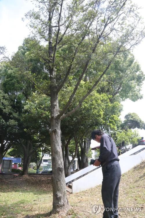 제주도, '전두환 기념식수 표지석' 설치 40년 만에 철거