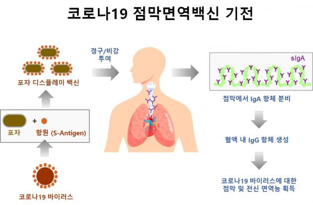 제노포커스, KAIST·와이바이오로직스 등 8개 기관과 코로나19 점막면역백신 공동 개발