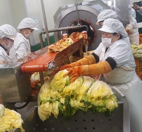 스마트공장 기술이 적용된 한 김치공장에서 직원들이 '양념 소 넣기' 기계에 배추를 넣고 있다. 안대규 기자