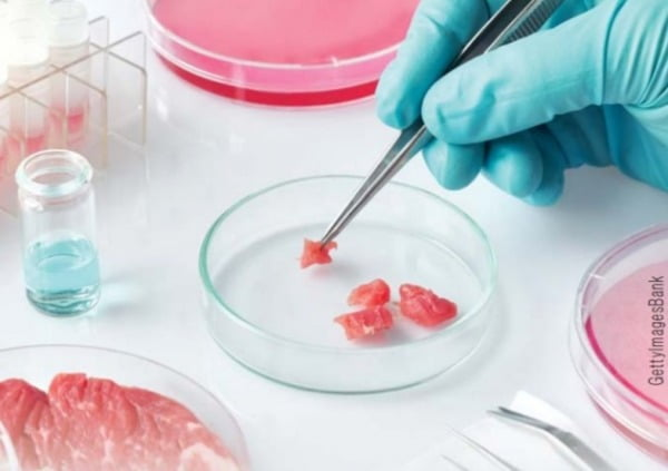 실험실서 만든 진짜 고기, 내년에 식탁 오른다