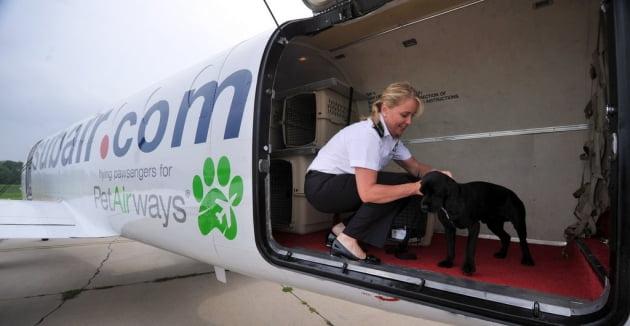 세계 최초의 애완동물 전용 항공사 펫에어웨이. AP연합뉴스