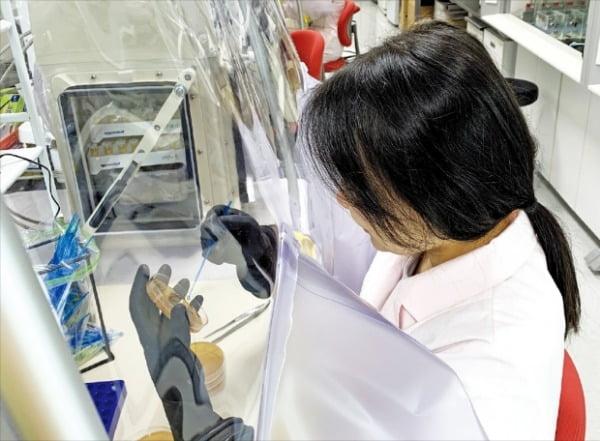 한국생명공학연구원의 한 연구원이 실험장비를 이용해 장내 미생물을 분리 및 배양하고 있다.  한국생명공학연구원 제공