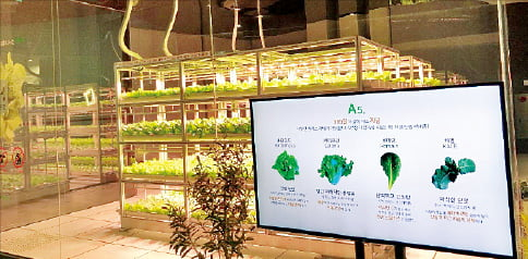 LED 조명으로 식물을 재배하는 '힐스테이트갤러리' 스마트팜.  현대건설 제공