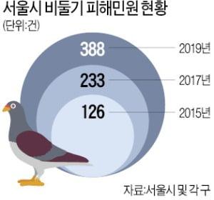 [숫자로 읽는 세상] 배설물·악취·소음…'민폐 비둘기' 어찌하오리까