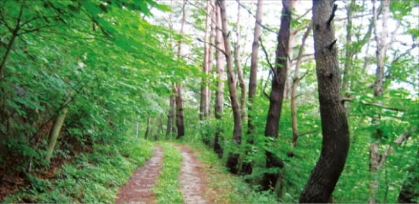 대티골자연치유마을, 들꽃과 눈 맞추며 7㎞ 숲길 걷다보면 몸도 마음도 '상쾌'