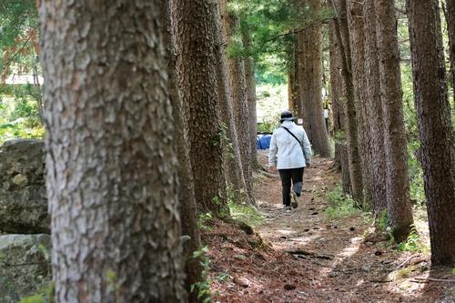 [걷고 싶은 길] '치유의 길'로 부활한 옛 국도, 외씨버선 7길