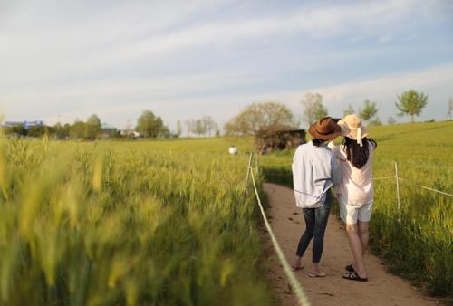 [자연이 주는 色의 향연] ① 고창 상하농원과 청보리밭