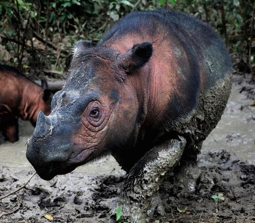 """""""현재 지구에서는 6번째 대멸종 진행 중…속도 더 빨라졌다"""""""