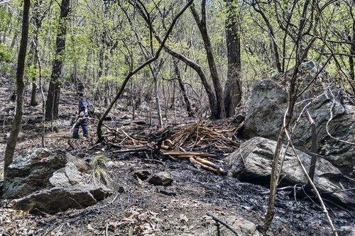 올봄 산불 피해면적 작년보다 10% 줄어…발생 건수도 1% 감소