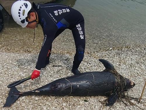 사천 해안가서 멸종 위기 상괭이 사체 발견