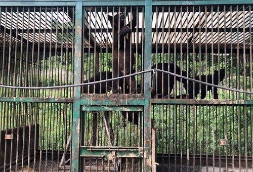 '웅담 불법거래 방지'…영산강환경청, 곰 사육시설 특별점검