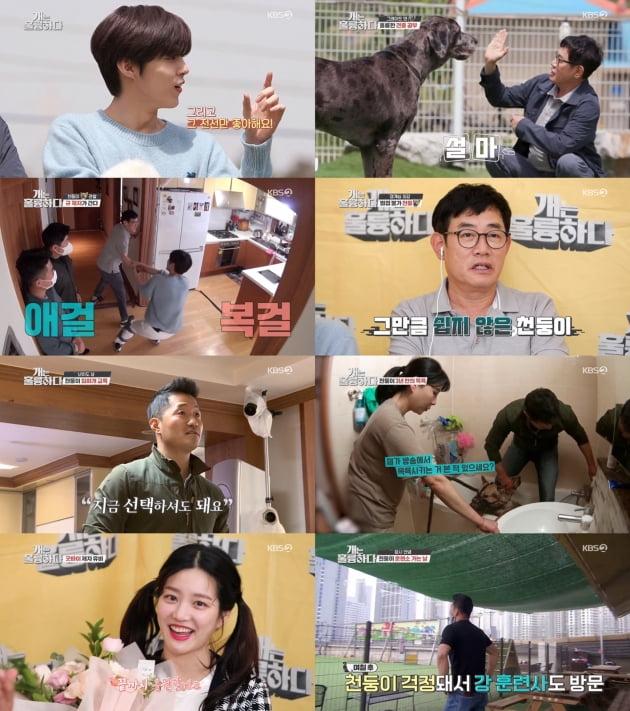 '개는 훌륭하다'/ 사진=KBS2 제공
