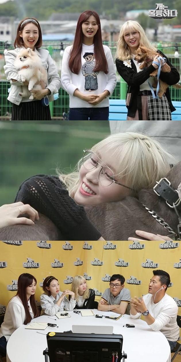 '개훌륭' 트와이스 출격 /사진=KBS2 제공