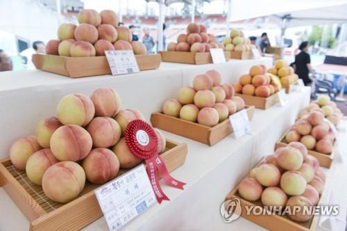원주 치악산 복숭아·횡성 토마토축제 코로나 19로 취소