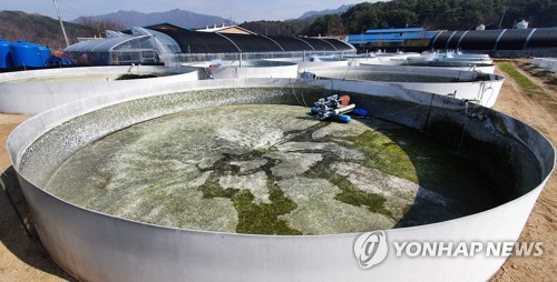 동물보호단체, '산천어축제 학대' 무혐의 처분에 항고