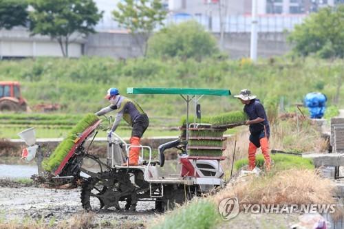 전남지역 모내기 76% 완료…오는 25일께 봄철 농작업 마무리