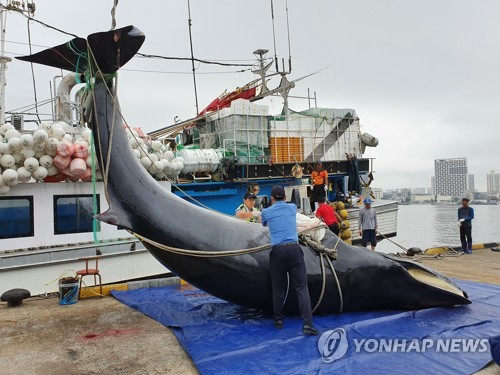 속초 앞바다서 7.8m 크기 죽은 밍크고래 발견…4천만원 예상
