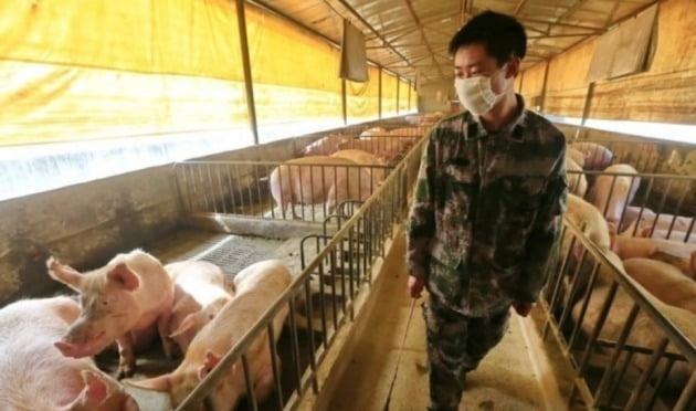 중국 쓰촨 지역의 돼지 농장 [사진=EPA 연합뉴스]