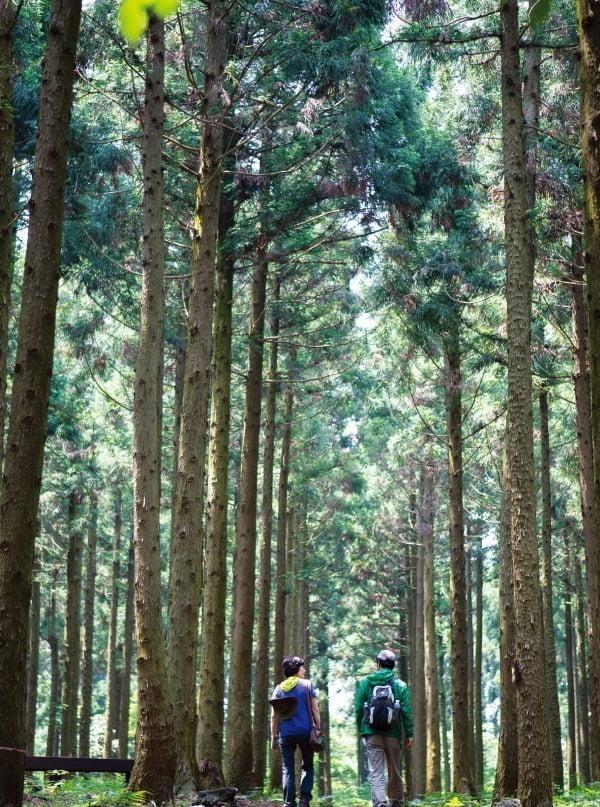 덮인 흙이 유난히 붉어서 이름 붙여진 붉은오름자연휴양림을 관광객이 산책하듯 걸으며 자연을 즐기고 있다. 제주관광공사 제공