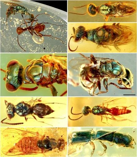 송진에 갇힌 곤충서 찾아낸 9천900만년 전 공룡시대 색깔