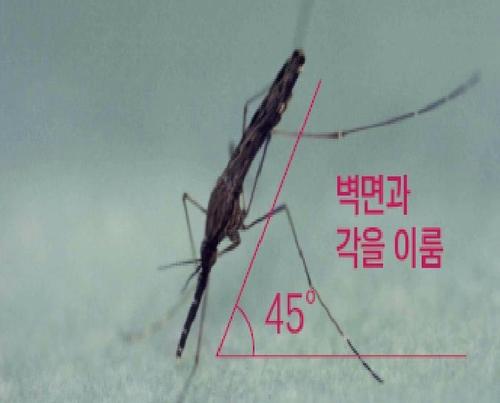 """경기 파주서 말라리아 감염 모기 확인…""""의심증상시 검사받아야"""""""