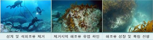 독도 '푸른 바닷속' 되살린다…해수부, 생태계 복원 사업
