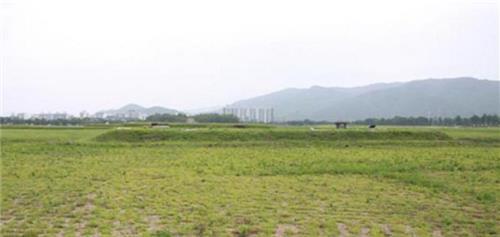 증강현실(AR)로 되살아난 신라 최대 사찰 '황룡사'