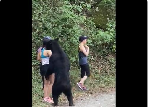 산책길에 야생 곰 만난 멕시코 여성, 목숨 건 셀카 한장