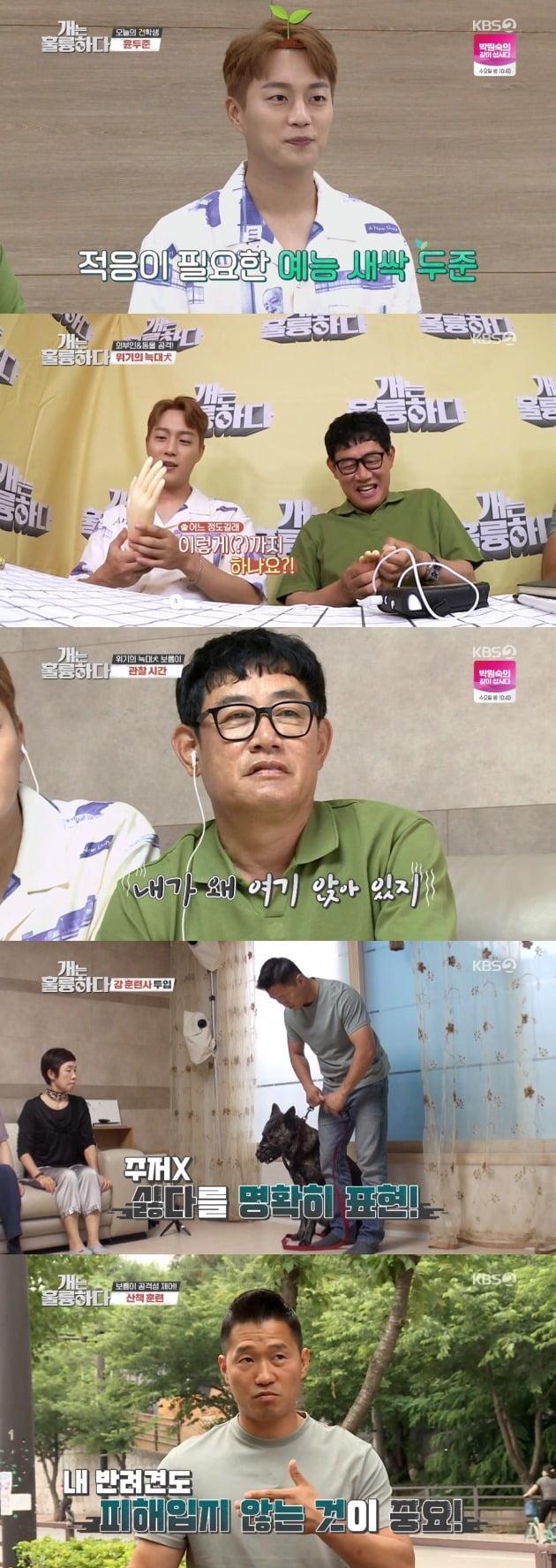 사진= KBS2 '개는 훌륭하다' 방송 화면.