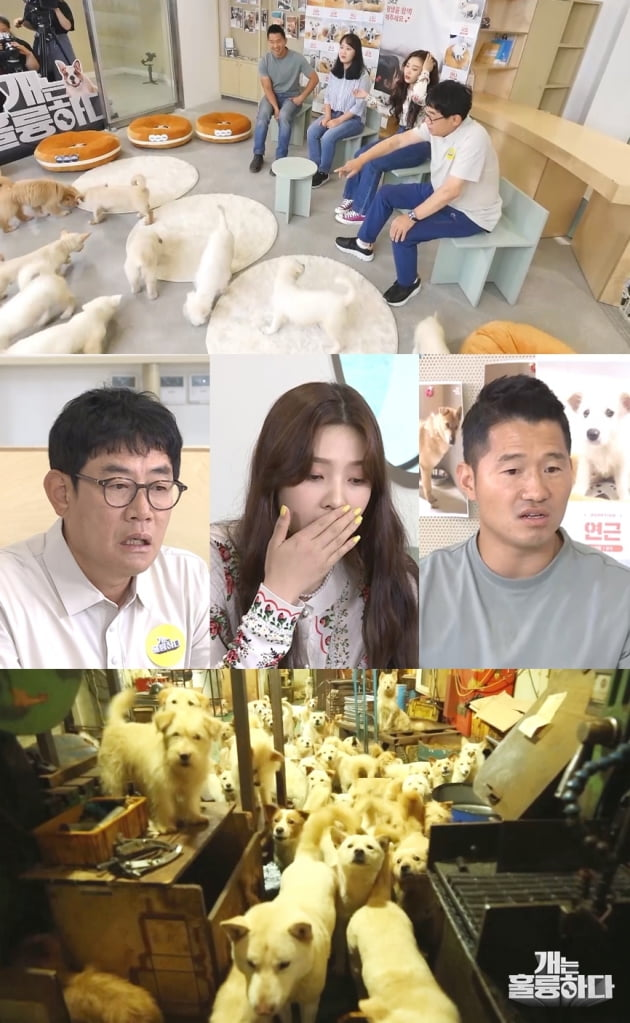 '개훌륭' 예고/ 사진=KBS2 제공