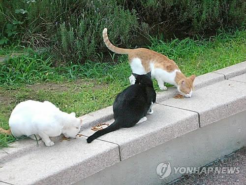 """'잘리고 타죽고' 잇따른 길고양이 잔혹사…""""엄격한 처벌 필요"""""""