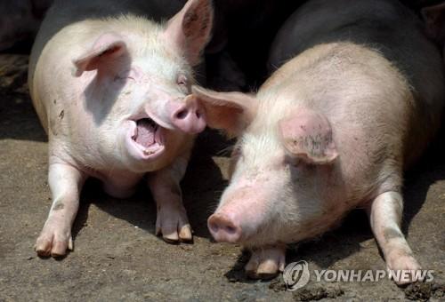 """중국, '팬데믹 가능성' 돼지독감에 """"필요한 조치 취할 것"""""""