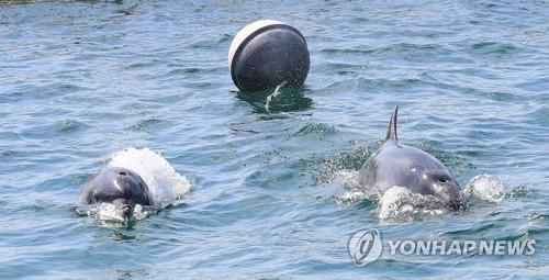 """""""어디에 있니?"""" 방류된 남방큰돌고래 3년째 '실종'"""