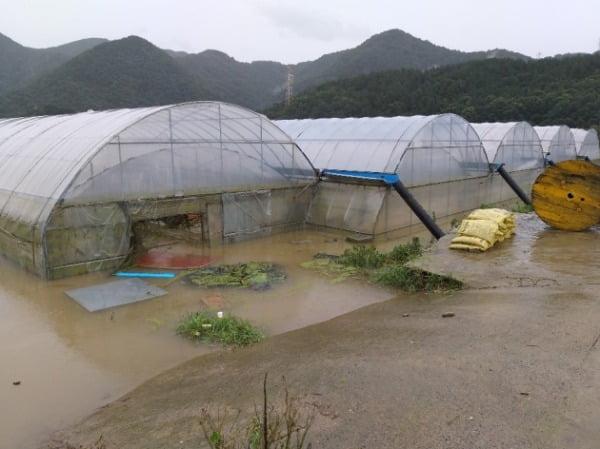 전북 진안군 용담댐 방류로 9일 오전 하류 지역인 충북 옥천군 동이면 적하리의 비닐하우스가 물에 잠겨 있다. /사진=연합뉴스