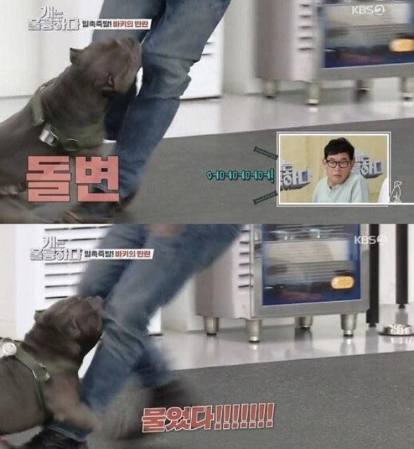 동물훈련사 강형욱이 지난 24일 방송된 KBS 2TV '개는 훌륭하다'에서 개물림 사고를 당하는 모습./사진 = KBS 2TV '개는 훌륭하다' 방송캡쳐