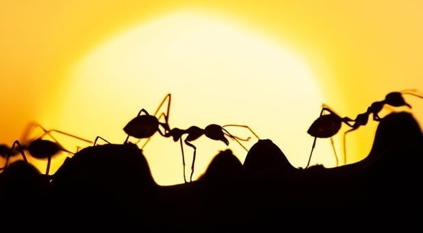 '한국 개미'공격 … 테슬라, 10 대 주주가되다