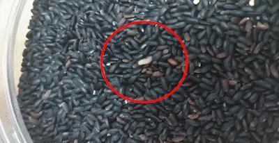 집단 식중독 안산 유치원…이번엔 '쌀벌레 급식꾸러미' 논란