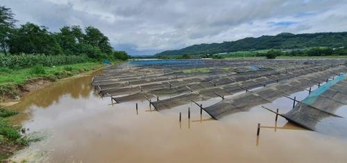 파주시 열흘간 폭우에 농경지 740㏊ 침수 피해