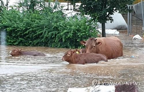 전북 집어삼킨 '수마'…544㎜ 폭우로 사망 2명·이재민 1702명