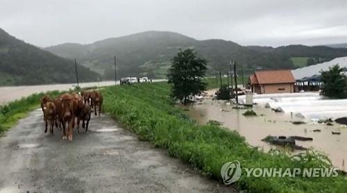 열흘째 폭우로 사망·실종 42명…이재민 7000명 육박