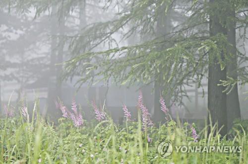 여름 빨리 가는 정선 만항재…시원한 가을바람 솔솔