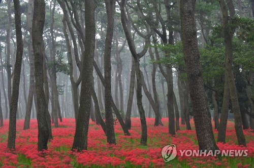 울산관광사진 전국 공모전 '태화강 떼까마귀' 대상
